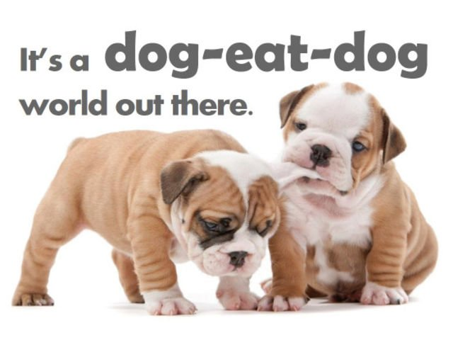 It's a Dog-Eat-Dog World– And Other Animal Idioms